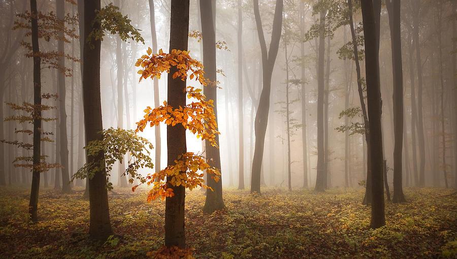 Landscape Photograph - In November Light by Franz Schumacher
