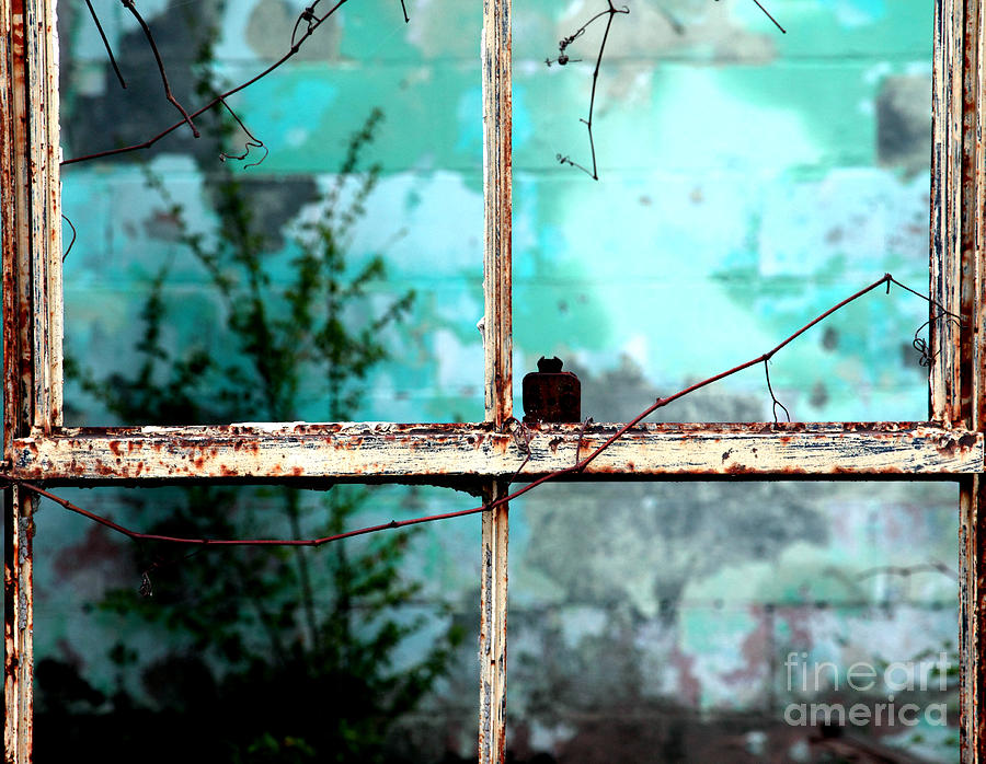 Windows Photograph - In Or Out by Amanda Barcon