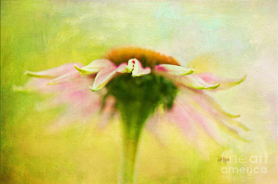 Daisy Photograph - In Perfect Harmony by Lois Bryan
