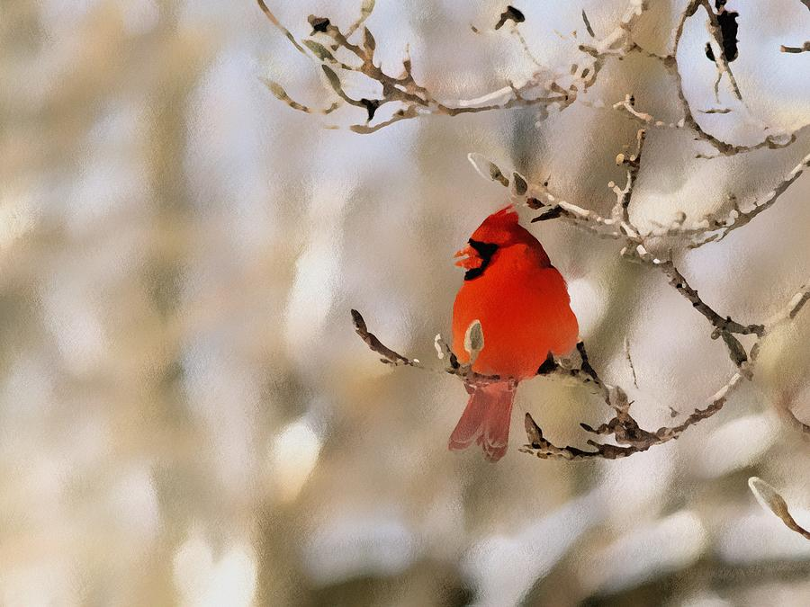 Cardinal Photograph - In Red by Gaby Swanson