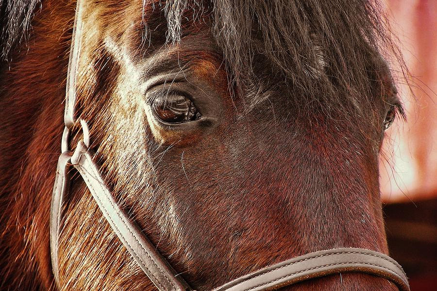 Horse Photograph - In Russian Kon by JAMART Photography
