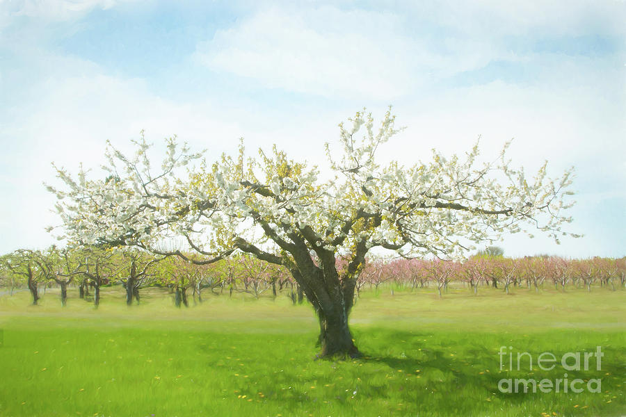 Niagara Photograph - In Springs Embrace by Marilyn Cornwell