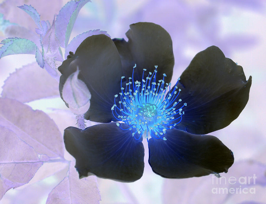 Inverted Colors Photograph - In Sympathy by Carol Komassa
