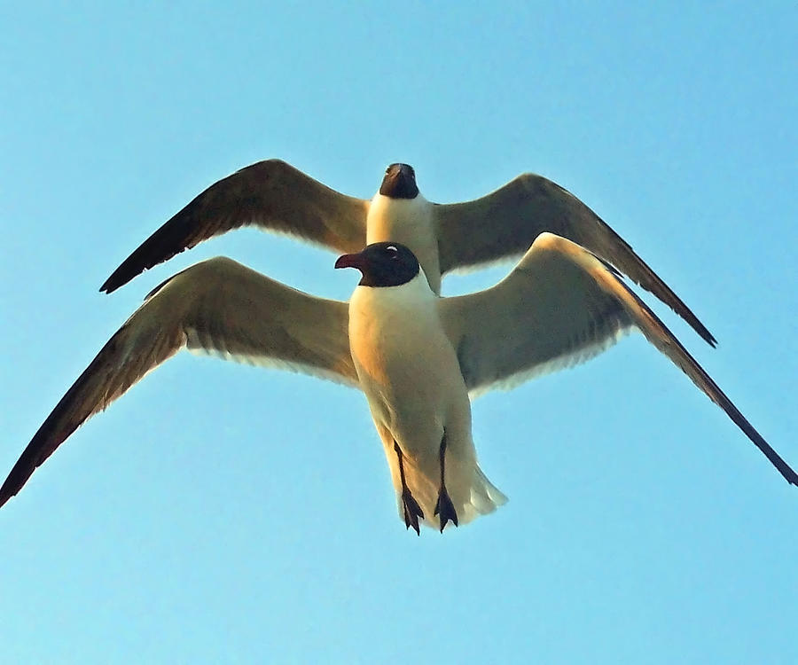 Seagulls Photograph - In Tandem At Sunset by Sandi OReilly