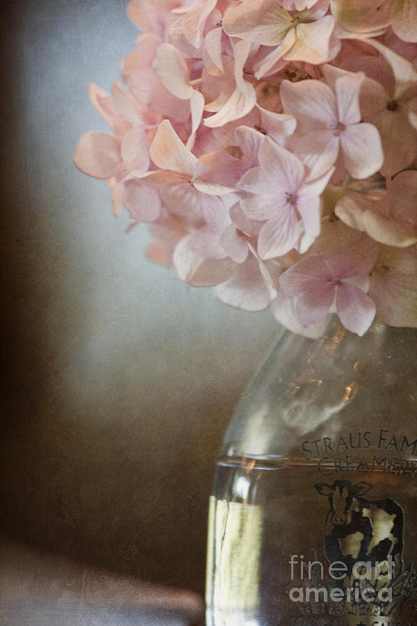 Pink Photograph - In The Country by Margie Hurwich