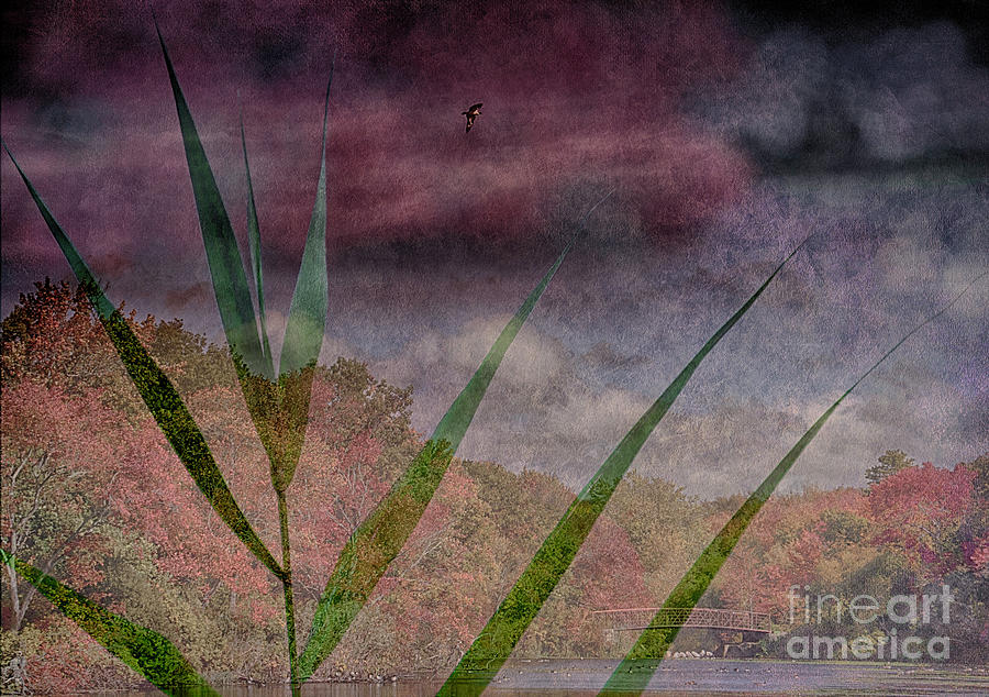 Distance Photograph - In The Distance Is The Season by Judy Hall-Folde