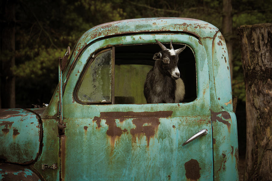 In The Drivers Seat by Daniel Houghton