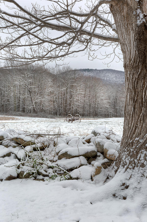 Winter Photograph - In The Field by Bill Wakeley