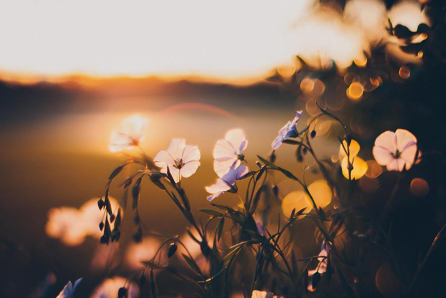 Garden Photograph - In the Garden by Tracy  Jade