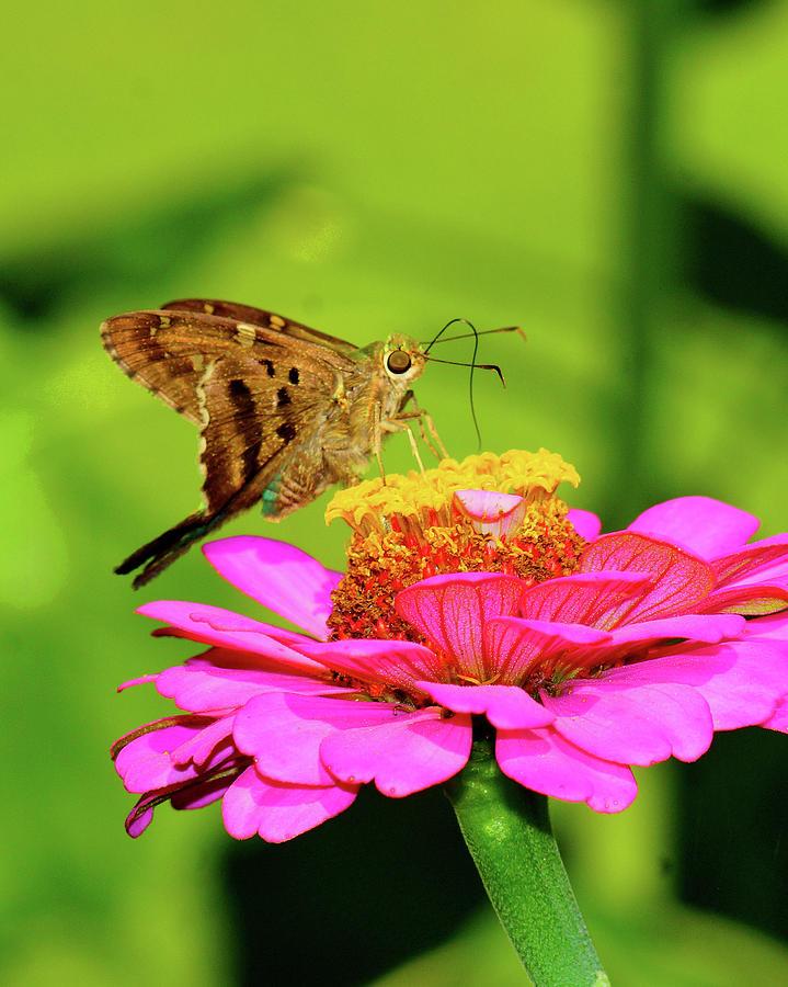In The Garden1 Photograph