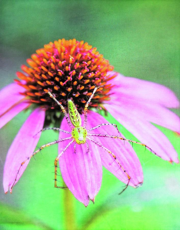 In The Garden4 Photograph