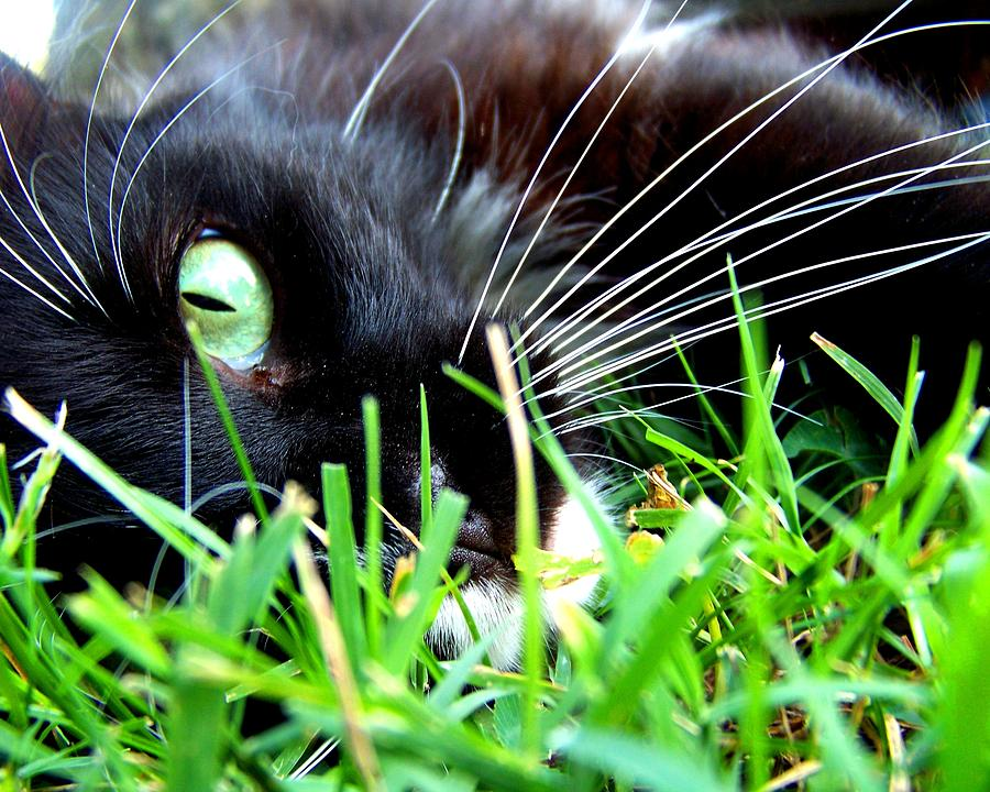 Cat Photograph - In The Grass by Jai Johnson