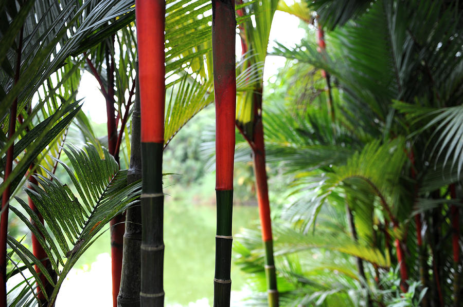 Red Photograph - In The Jungle by Jessica Rose