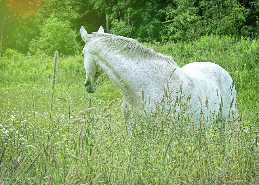 Horse Photograph - In The Meadow by JAMART Photography