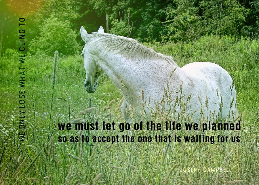 Equine Photograph - In The Meadow Quote by JAMART Photography