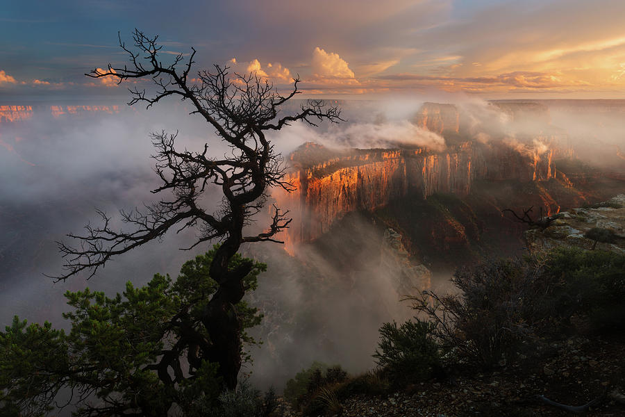 Arizona Photograph - In The Mist by Adam Schallau