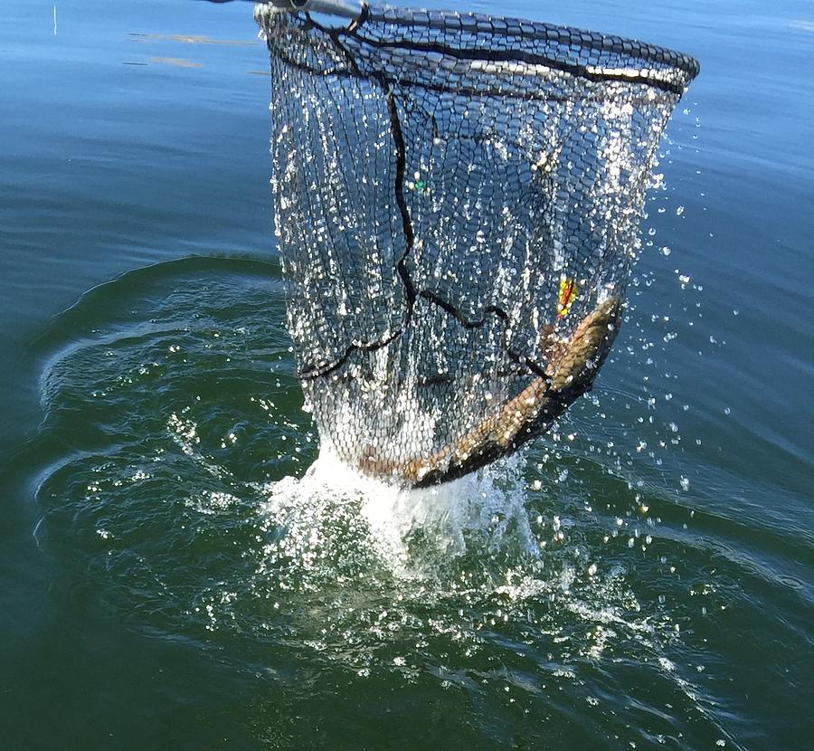 Trout Photograph - In The Net by Beverly Johnson