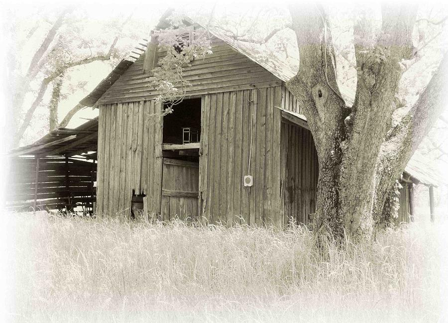 Barn Photograph - In The Pecan Orchard by Nelson Strong