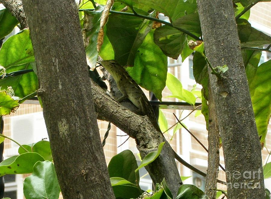 Lizard Photograph - In The Shade by Kathy Daxon