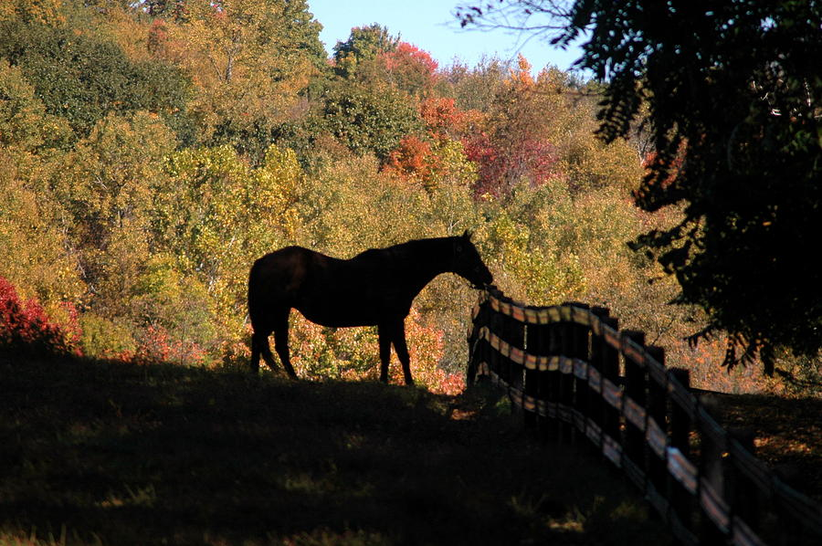 Horses Photograph - In The Shadow by William A Lopez