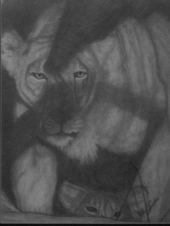Lioness Drawing - In The Shadows by Jose Cabral