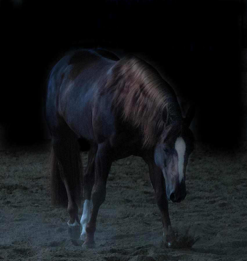 Horse Photograph - In The Shadows V by Eleszabeth McNeel