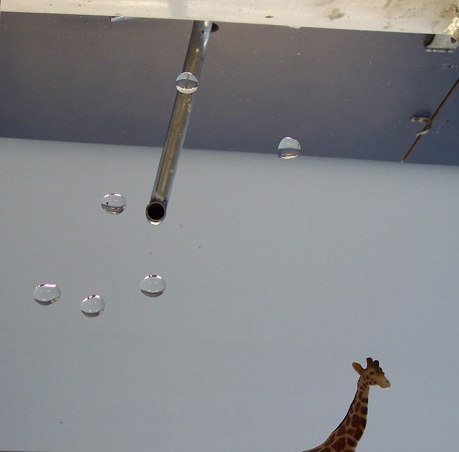 Giraffe Photograph - In the Sink by Michelle Miron-Rebbe