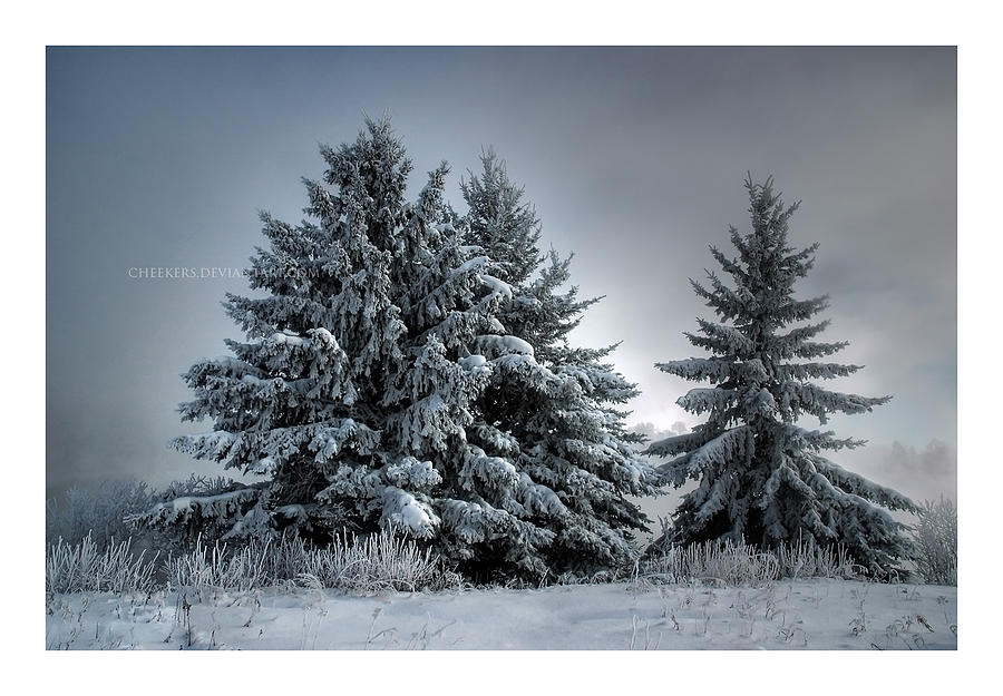 Landscape Photograph - In The Spirit Of Winter by Heather  Rivet
