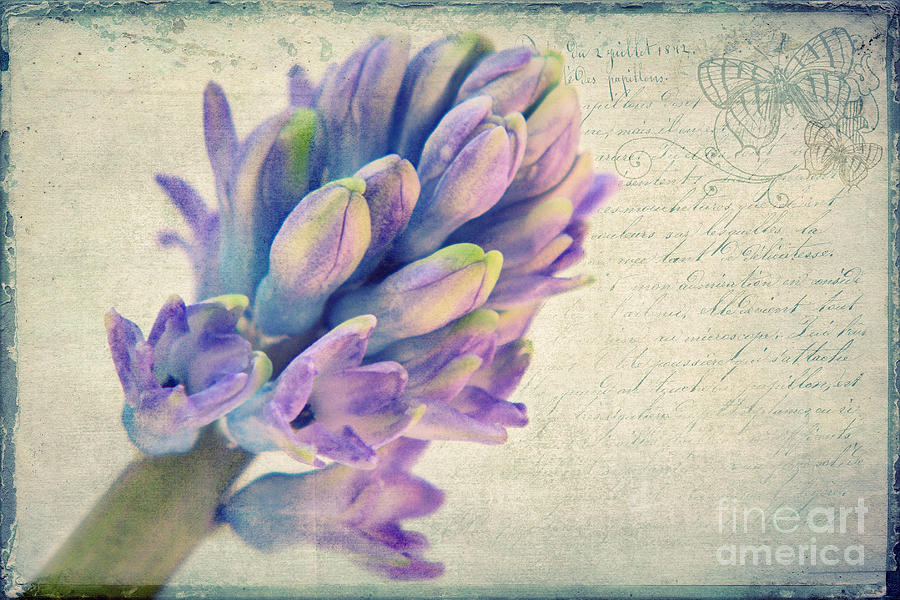 Hyazinte Photograph - In The Spring by Angela Doelling AD DESIGN Photo and PhotoArt
