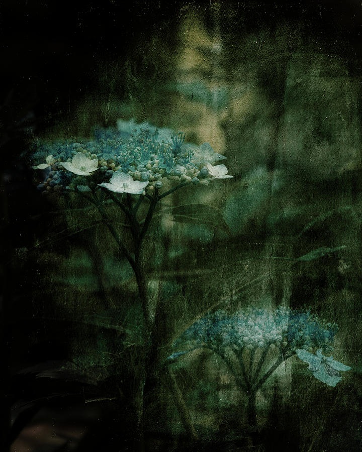 Teal Flowers Photograph - In The Still Of The Night by Bonnie Bruno