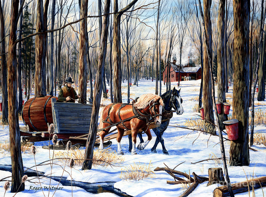 Belgian Horse Painting - In The Sugar Bush by Roger Witmer