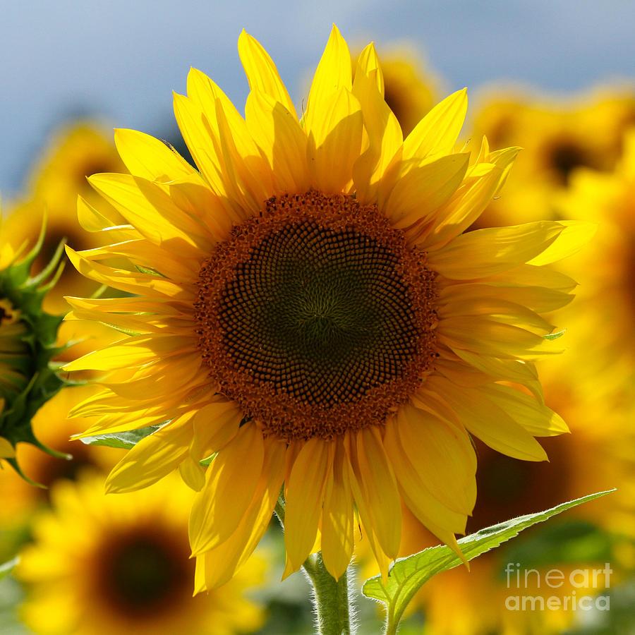In The Sun Photograph