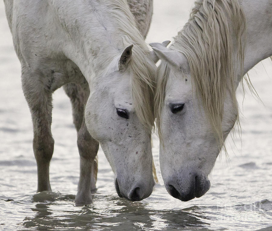 Camargue Photograph - In The Water At Dawn by Carol Walker