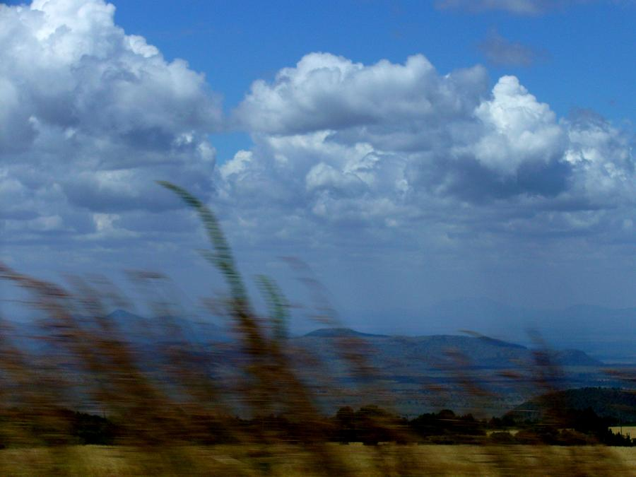 Wind Photograph - In The Wind by Carole Guillen