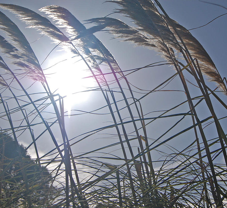 Grass Photograph - In The Wind by Jean Booth