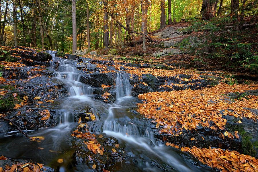 Vaughan Woods Photograph - In The Woods by Rick Berk
