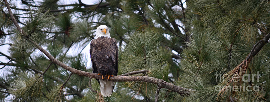 Eagle Photograph - In Time by Greg Patzer