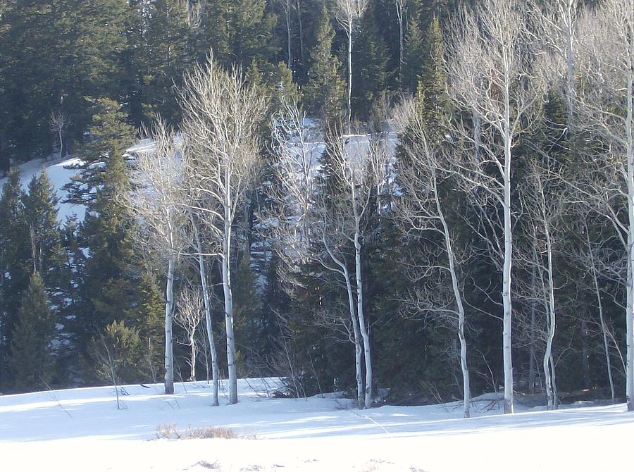 Trees Photograph - In Winter by Susan Pedrini