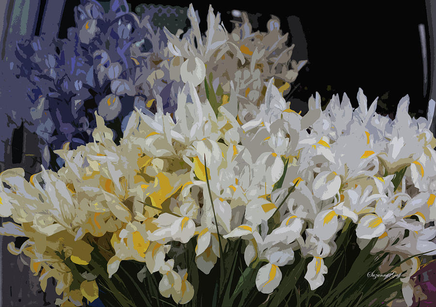 Incredible Irises - Cutout by Suzanne Gaff