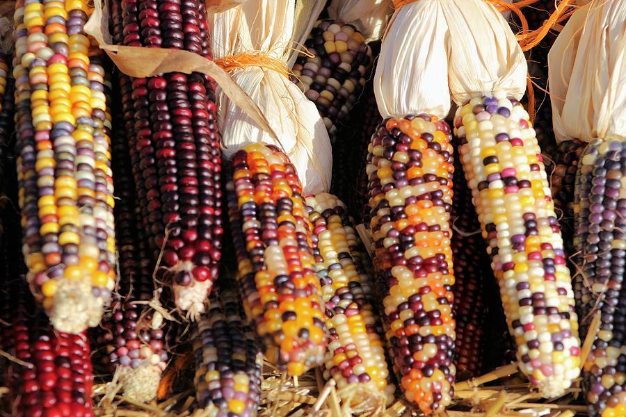 Indian Corn Photograph