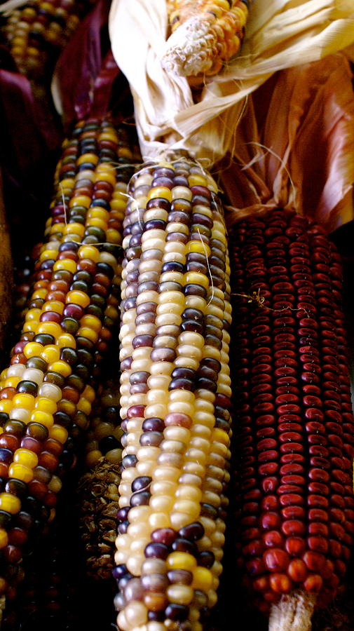 Farmers Market Photograph - Indian Corn by Sonja Anderson