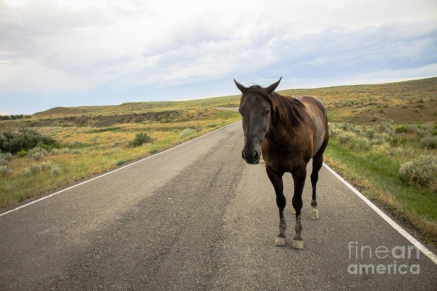 Landscape Photograph - Indian Horse by Sandy Adams