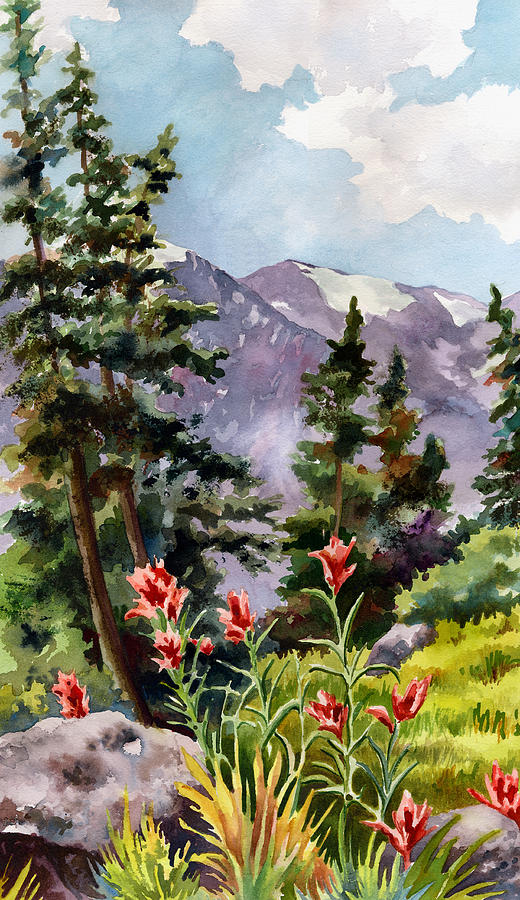Indian Paintbrush by Anne Gifford