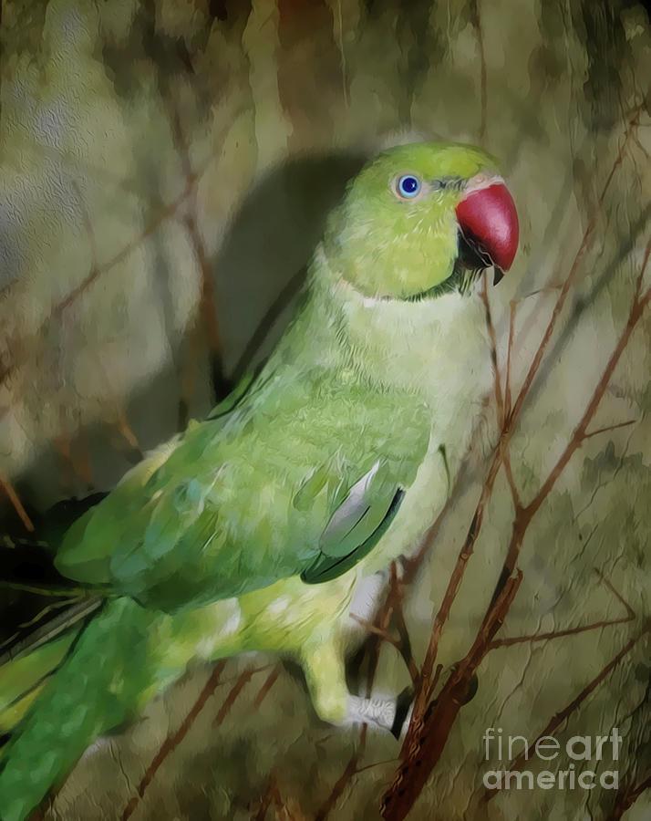 Indian Ringneck Parrot Photograph By Judy Palkimas