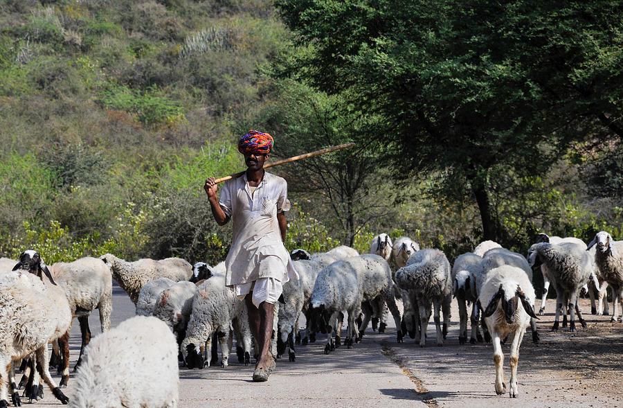 Shepherd Photograph - Indian Shepherd by Freepassenger By Ozzy CG