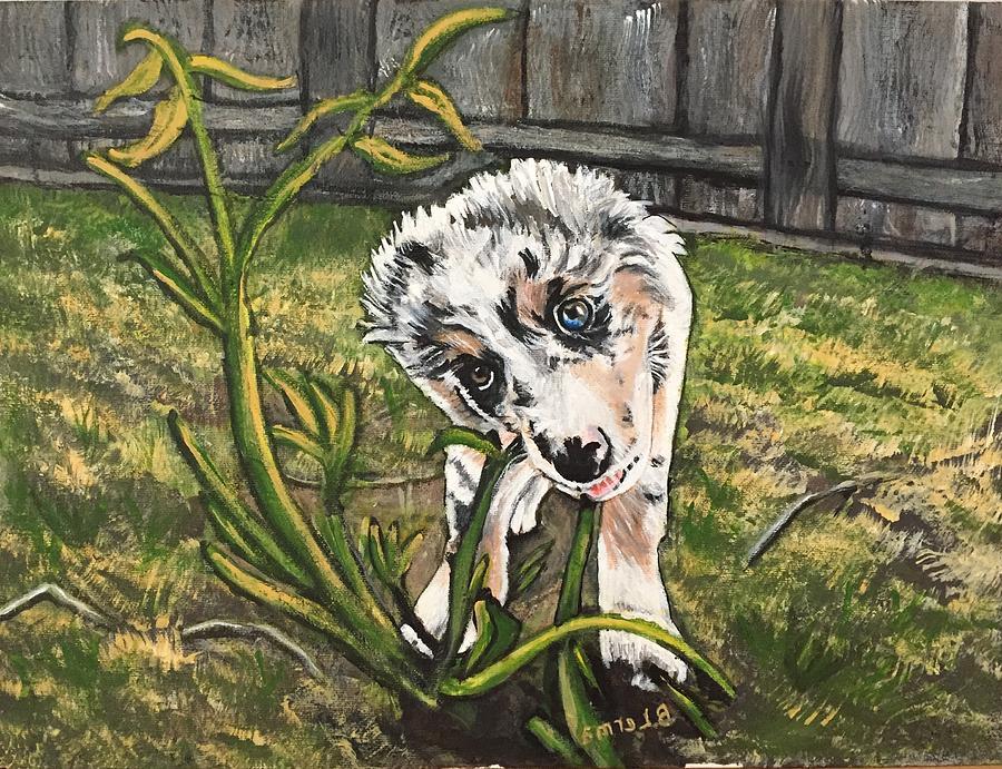 Australian Shepherd Painting - Indiana Bones by Bobi Lerma