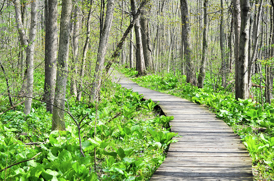 Indiana Dunes National Lakeshore Photograph - Indiana Dunes Great Green Marsh Boardwalk by Kyle Hanson