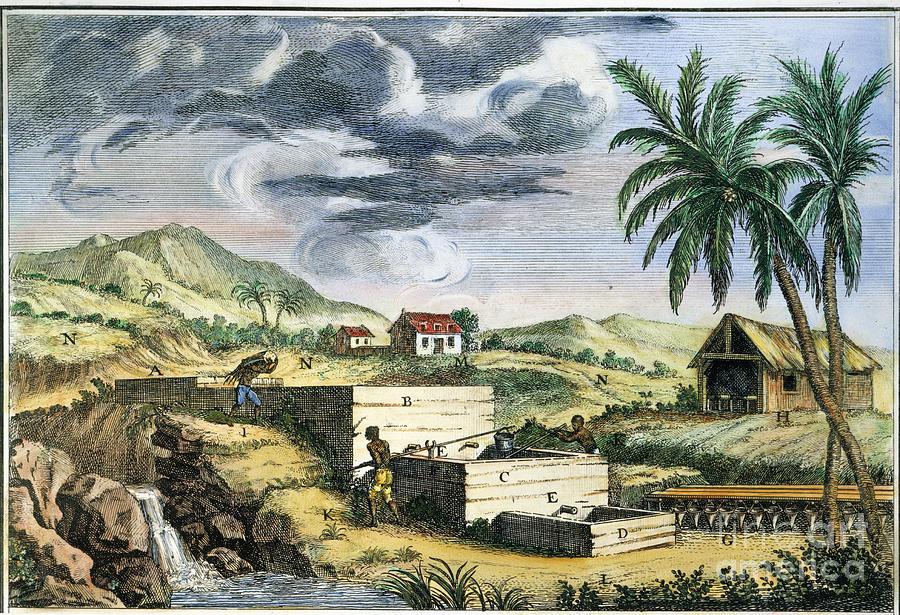 Indigo Plantation Photograph By Granger