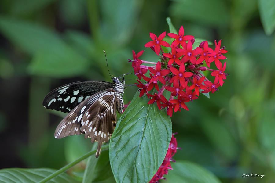 Paper Kite Butterfly Photograph - Indoor Living Day Butterfly Center Callaway Gardens Art by Reid Callaway