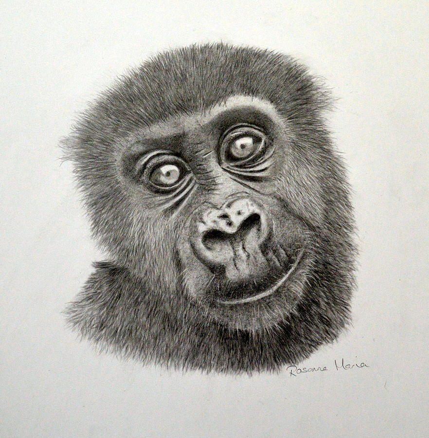 Uncategorized Gorilla Drawings infant western lowland gorilla drawing by rosanna maria gorillas maria